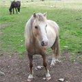 Koně — vesnický život