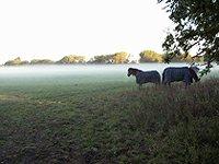 typická anglická mlha