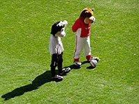 fotbal Charlton stadium