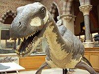 Museum přírodní historie Oxford