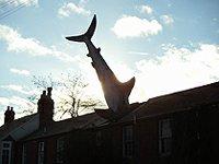 Žralok Headington