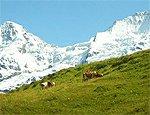 Švýcarsko na kole