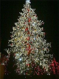 Praha staroměstké náměstí vánoční strom