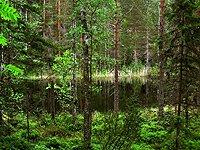 Kolin kansallispuisto les