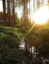 Rylays rašeliniště