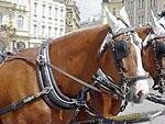 Koně – Praha