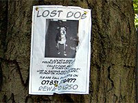 Enland lost dog